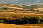 tours a pienza e in val d'orcia